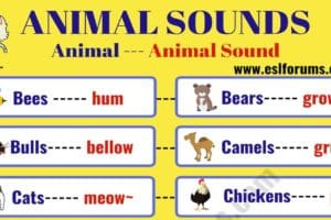 Learn Interesting Animal Sounds in English 12