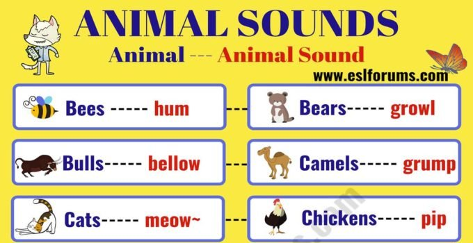 Learn Interesting Animal Sounds in English 1