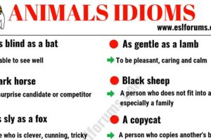 10 Animal Idioms & Phrases You Should Learn 10