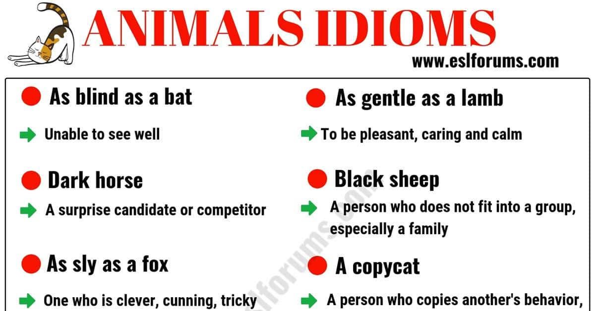 10 Animal Idioms & Phrases You Should Learn 1