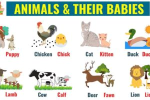Cute Baby Animals: Learn Popular Animals and Their Babies! 56