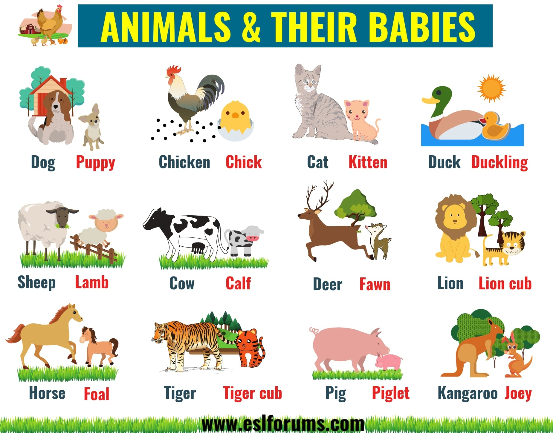 Cute Baby Animals: Learn Popular Animals and Their Babies! 1