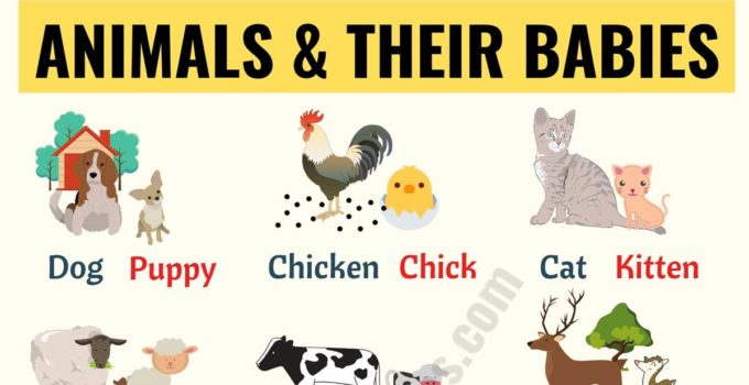 Baby Animals: List of Popular Animals and Their Babies! 1