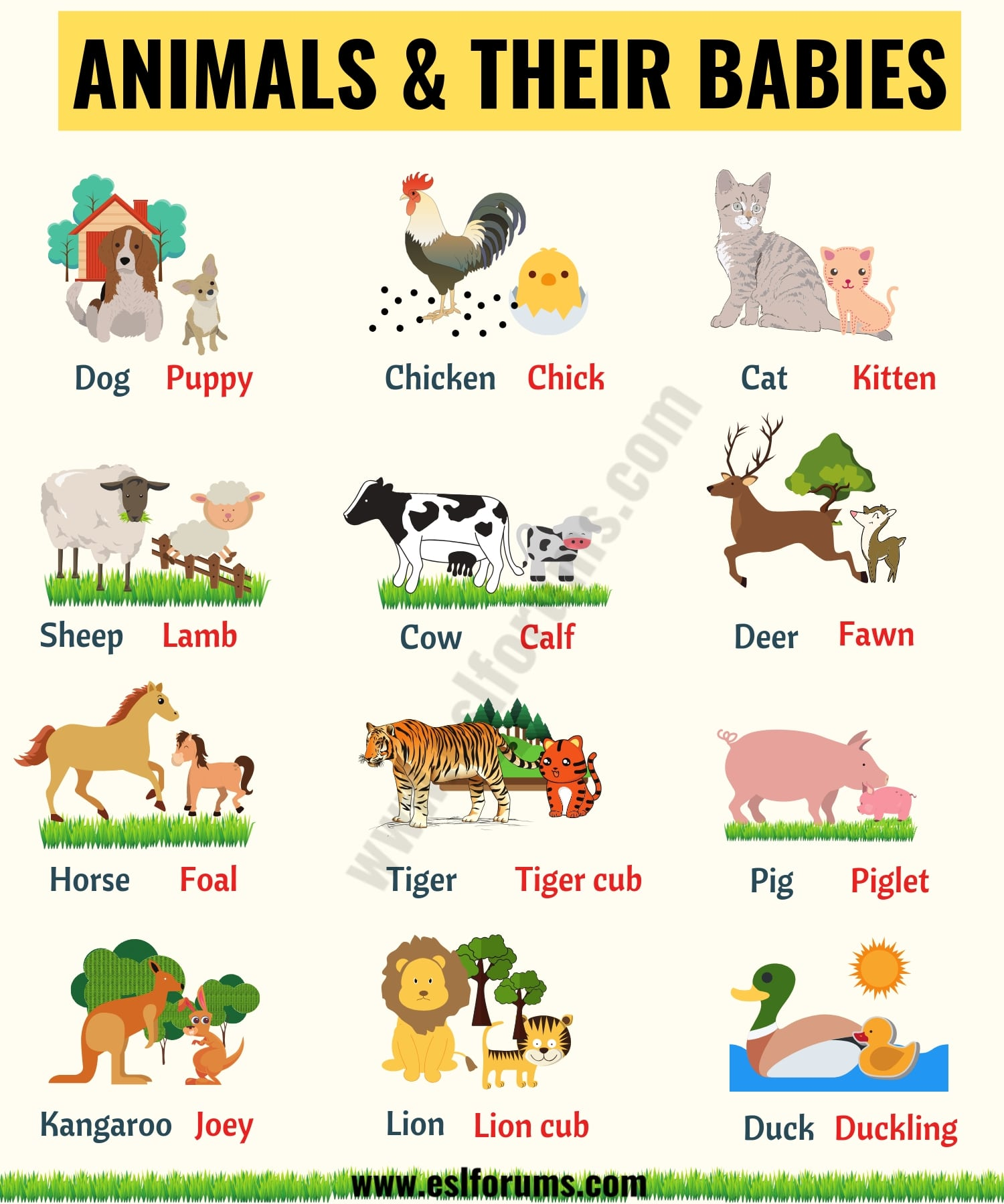 List of Animals: A Big Lesson of Animal Names with the Pictures! - ESL  Forums