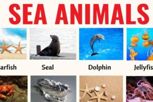 Sea Animals: List of 20+ Interesting Sea, Ocean Animals with the Picture 11
