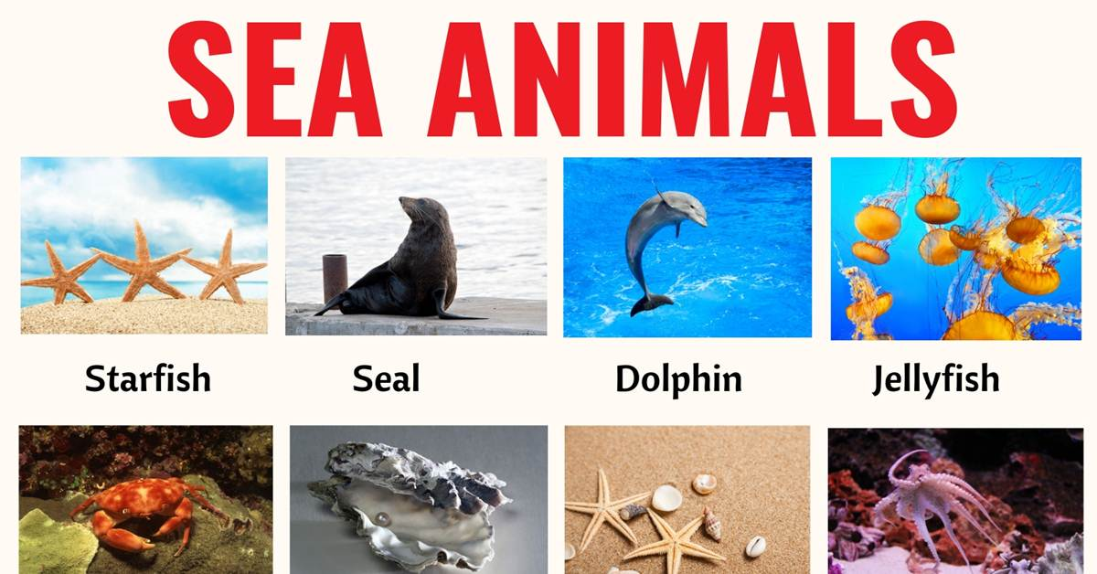 Sea Animals: List of 20+ Interesting Sea, Ocean Animals with the Picture 1