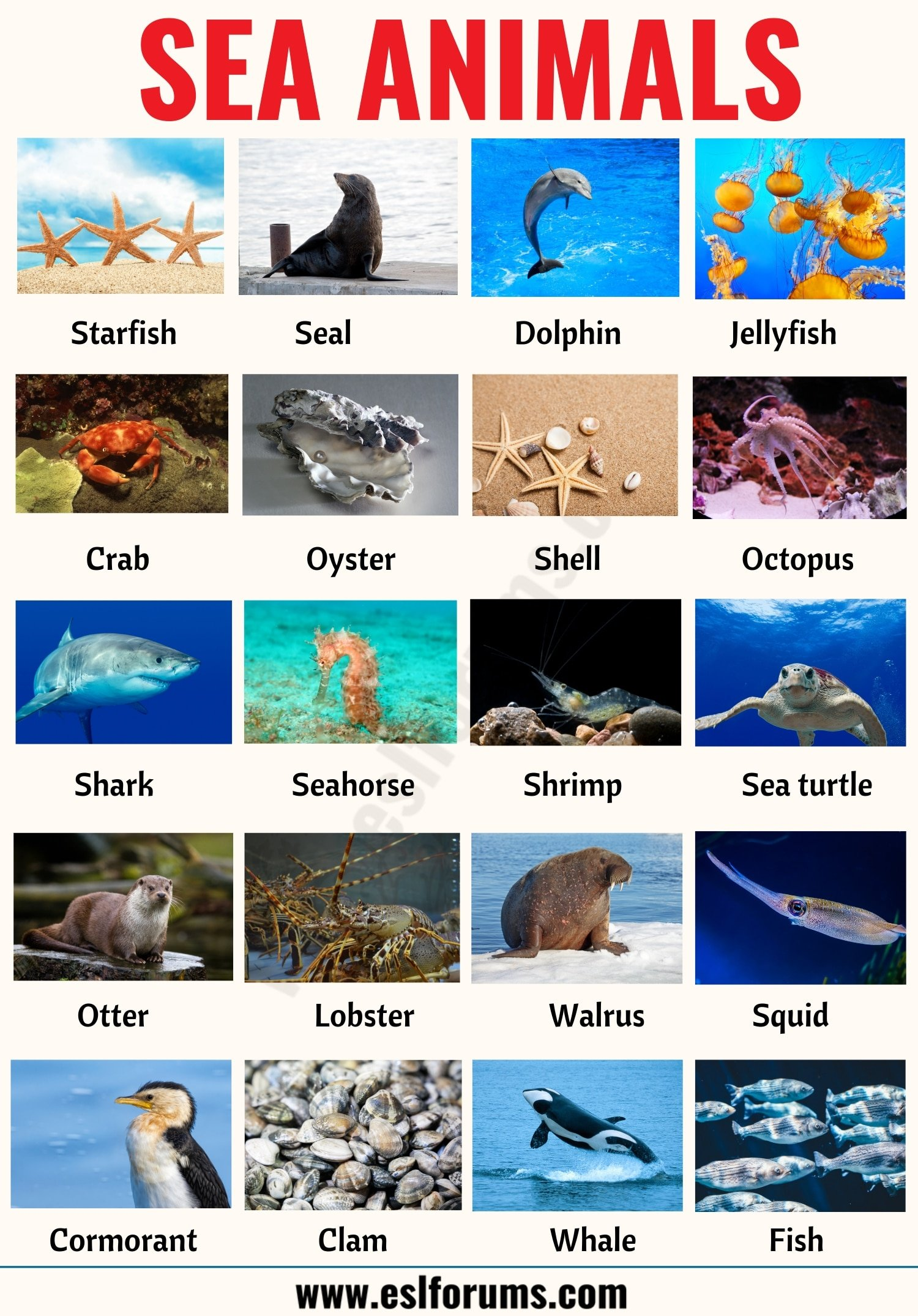 Sea Animals: List of 20+ Interesting Sea, Ocean Animals with the Picture