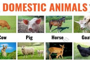 Farm Animals: List of 15+ Popular Farm/ Domestic Animals in English 15