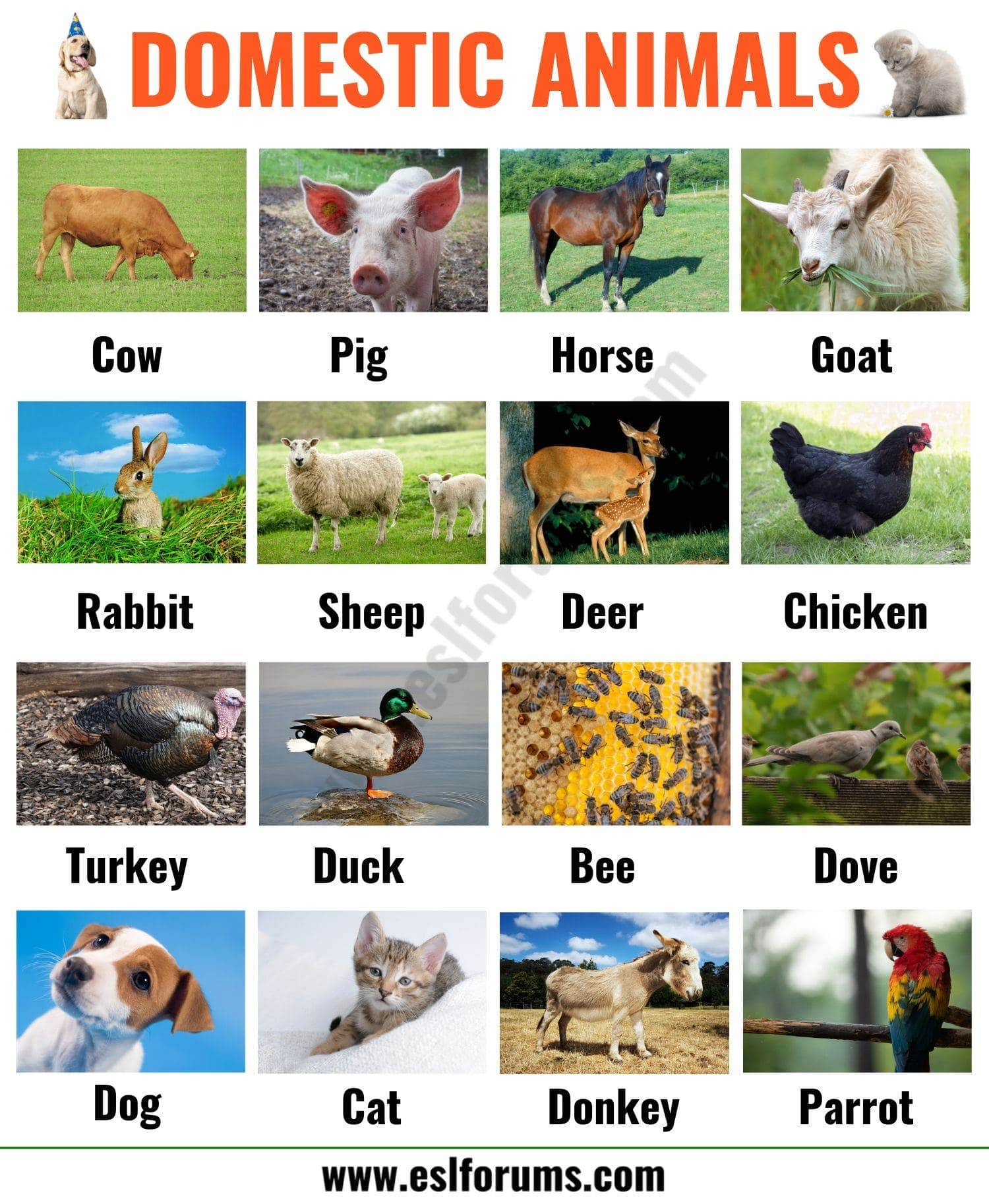 Farm Animals: List of 15+ Popular Farm/ Domestic Animals in English