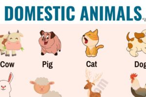 Farm Animals: List of 15+ Popular Farm/ Domestic Animals in English 17