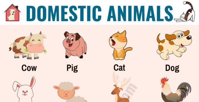 Farm Animals: List of 15+ Popular Farm/ Domestic Animals in English 1