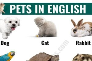 Types of Pets: Learn Different Names of Pets in English 12