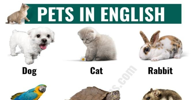 Types of Pets: Learn Different Names of Pets in English 1