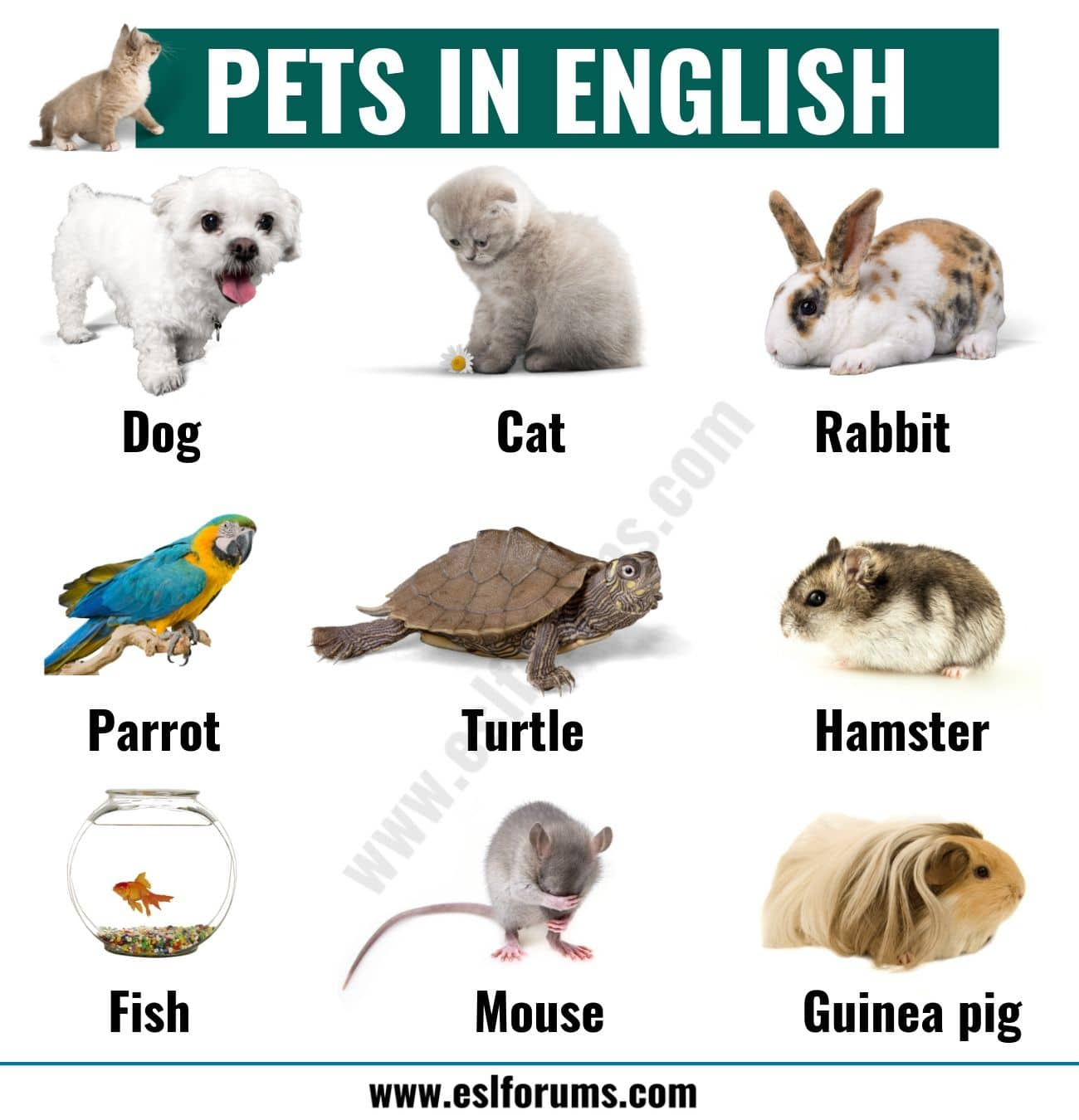 Types of Pets: Learn Different Names of Pets in English