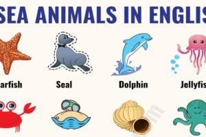 Sea Animals: List of 20+ Interesting Sea, Ocean Animals with the Picture 76