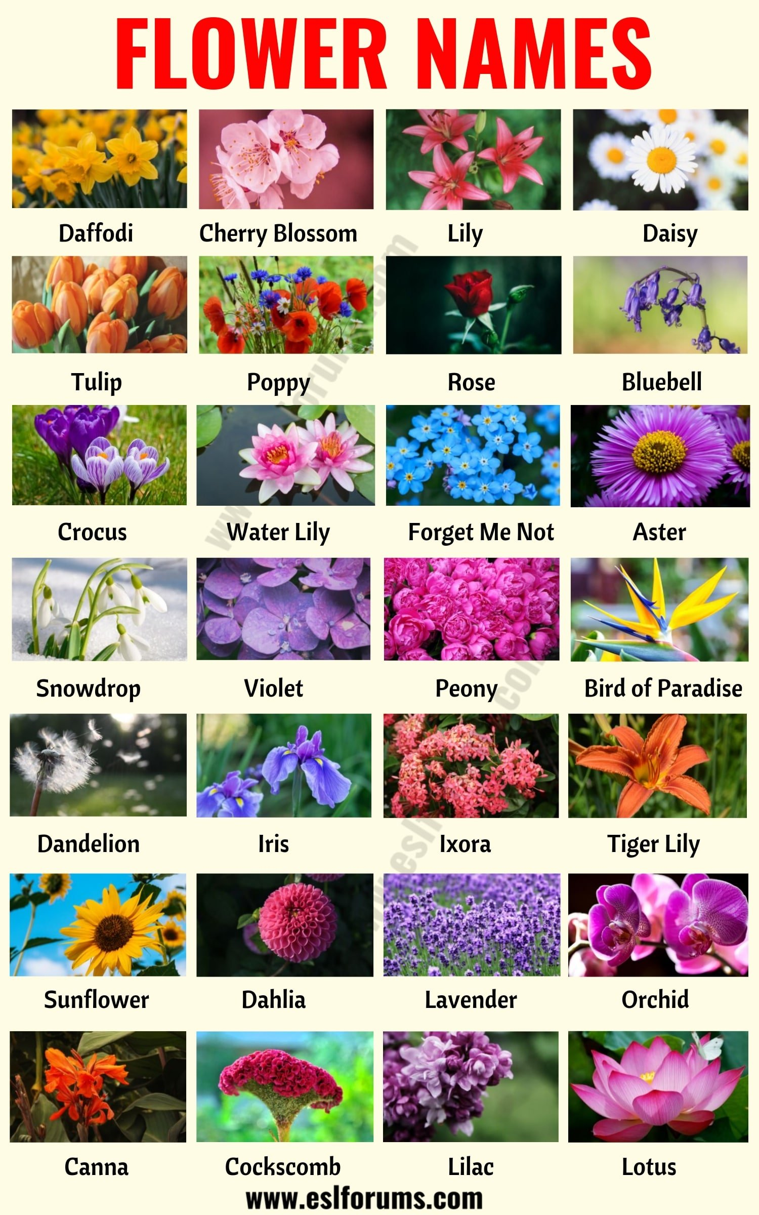 Flower Names: List of 25+ Popular Types of Flowers with the Pictures