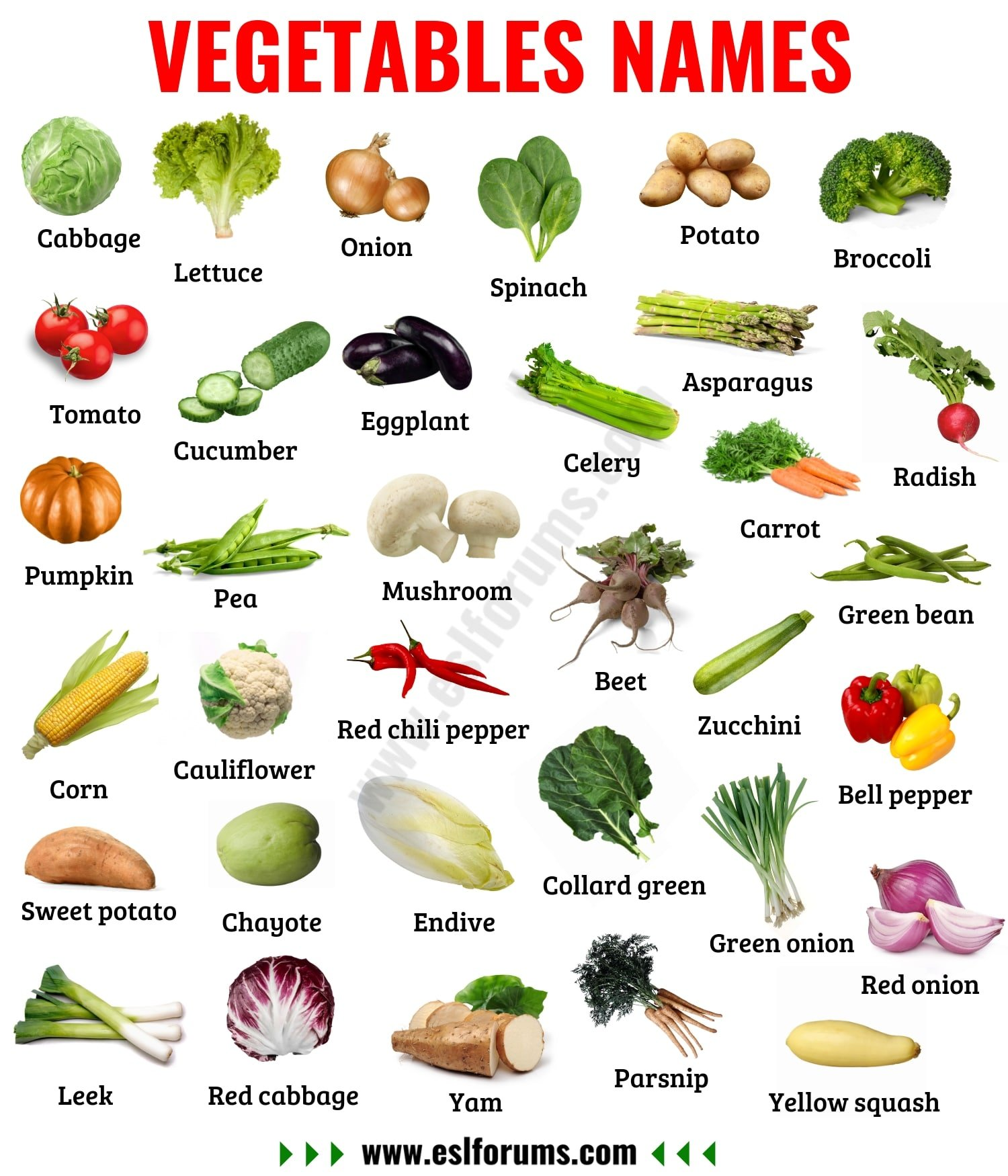 List of Vegetables: Useful Names of Vegetables with the Picture!