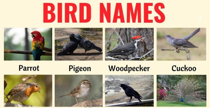 Bird Names: Different Types of Birds in English with the Picture! 1