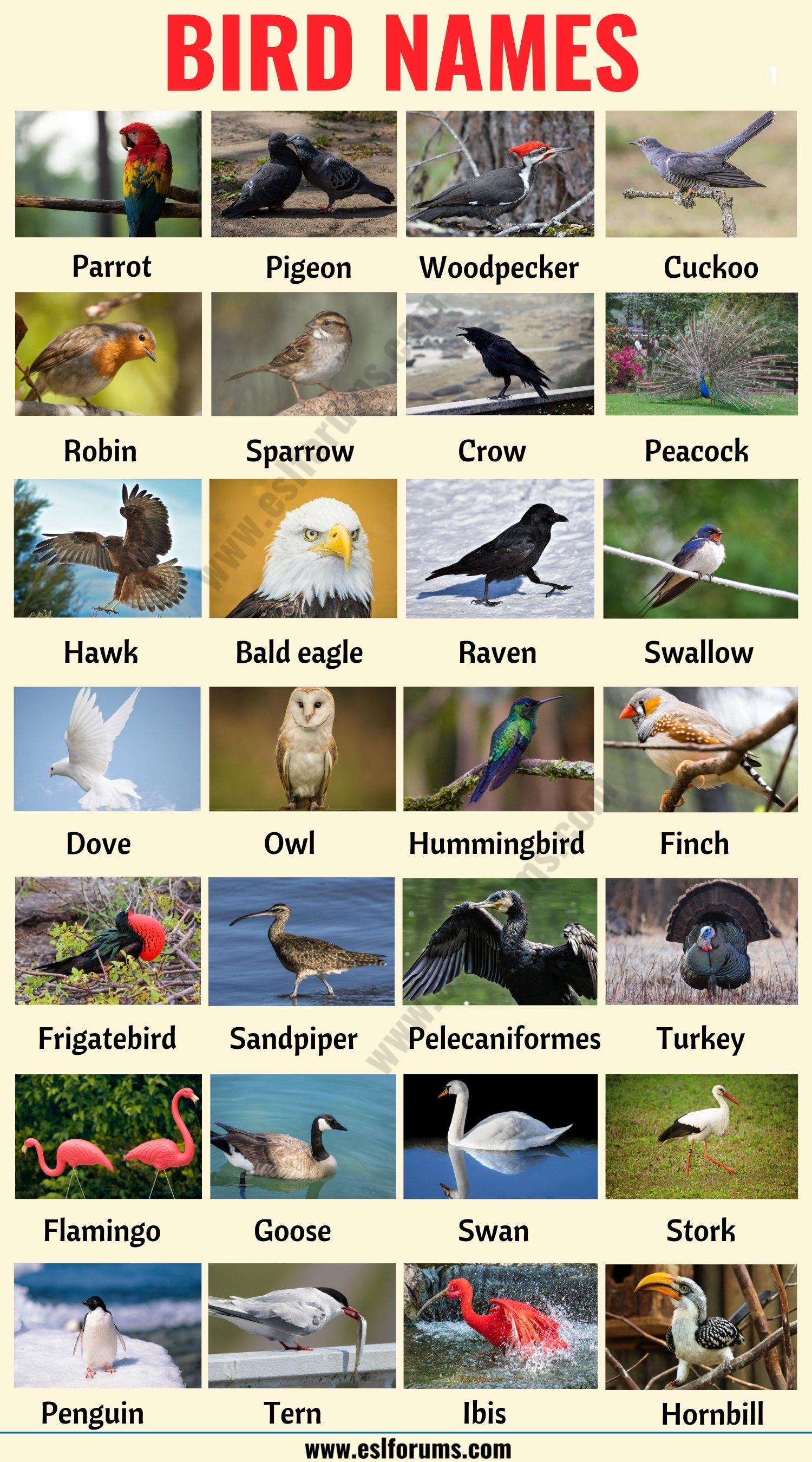 Bird Names: Different Types of Birds in English with the Picture