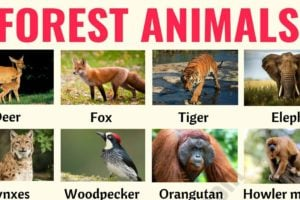 Forest Animals: List of Animals That Live in the Forest with ESL Pictures! 10