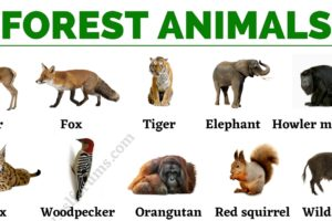 Forest Animals: List of Animals That Live in the Forest with ESL Pictures! 9
