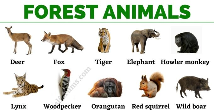 Forest Animals: List of Animals That Live in the Forest with ESL Pictures! 1