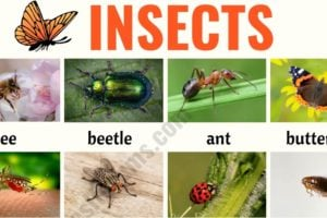 INSECTS: Useful List of Insects with the Picture and Examples 3