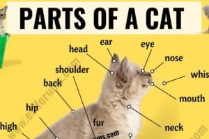 Cat Anatomy: Different Parts of a Cat with ESL Picture! 3