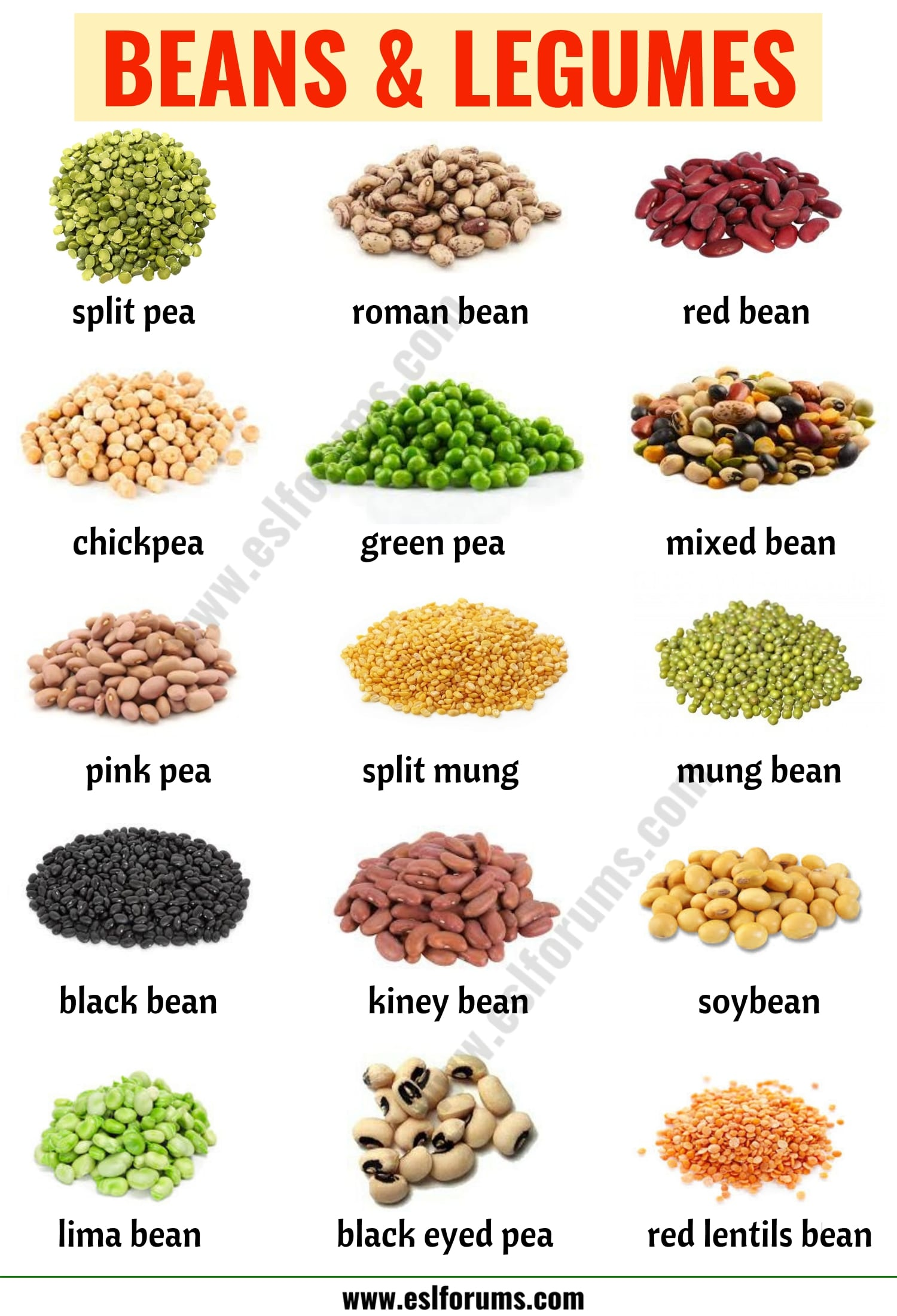 Types of Beans: 15 Different Types of Beans & Legumes with the Picture
