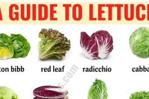 Types of Lettuce: 21 Different Lettuce Types with ESL Picture 5