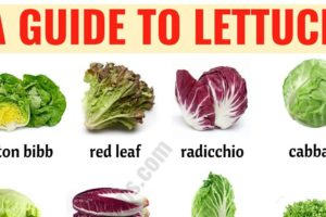 Types of Lettuce: 21 Different Lettuce Types with ESL Picture 6