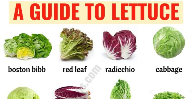 Types of Lettuce: 21 Different Lettuce Types with ESL Picture 1