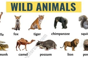 Wild Animals: List of 45+ Wild Animals Names in English 14