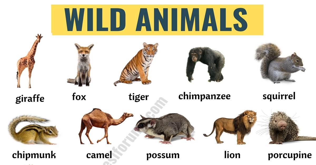 Wild Animals: List of 45+ Wild Animals Names in English 1