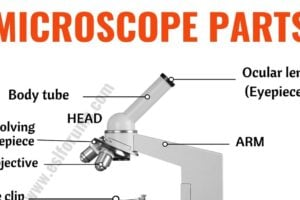 Parts of a Microscope: Useful List of Microscope Parts with ESL Picture! 13