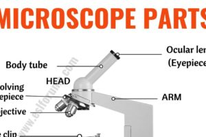 Parts of a Microscope: Useful List of Microscope Parts with ESL Picture! 12