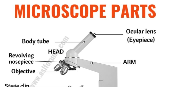Parts of a Microscope: Useful List of Microscope Parts with ESL Picture! 9