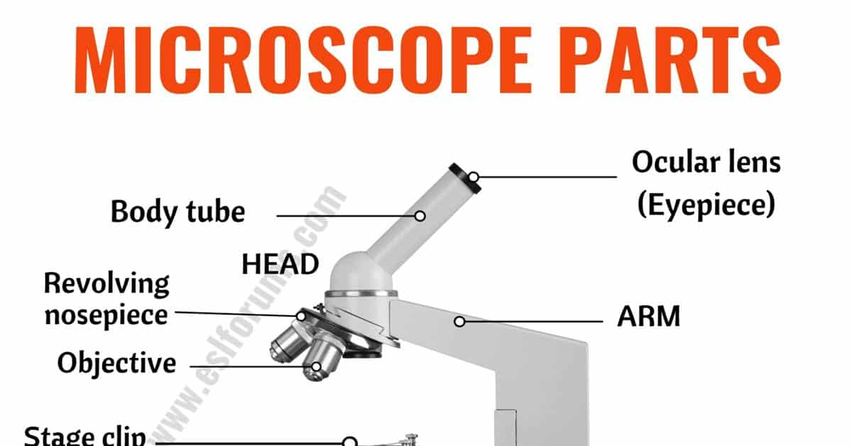 Parts of a Microscope: Useful List of Microscope Parts with ESL Picture! 1