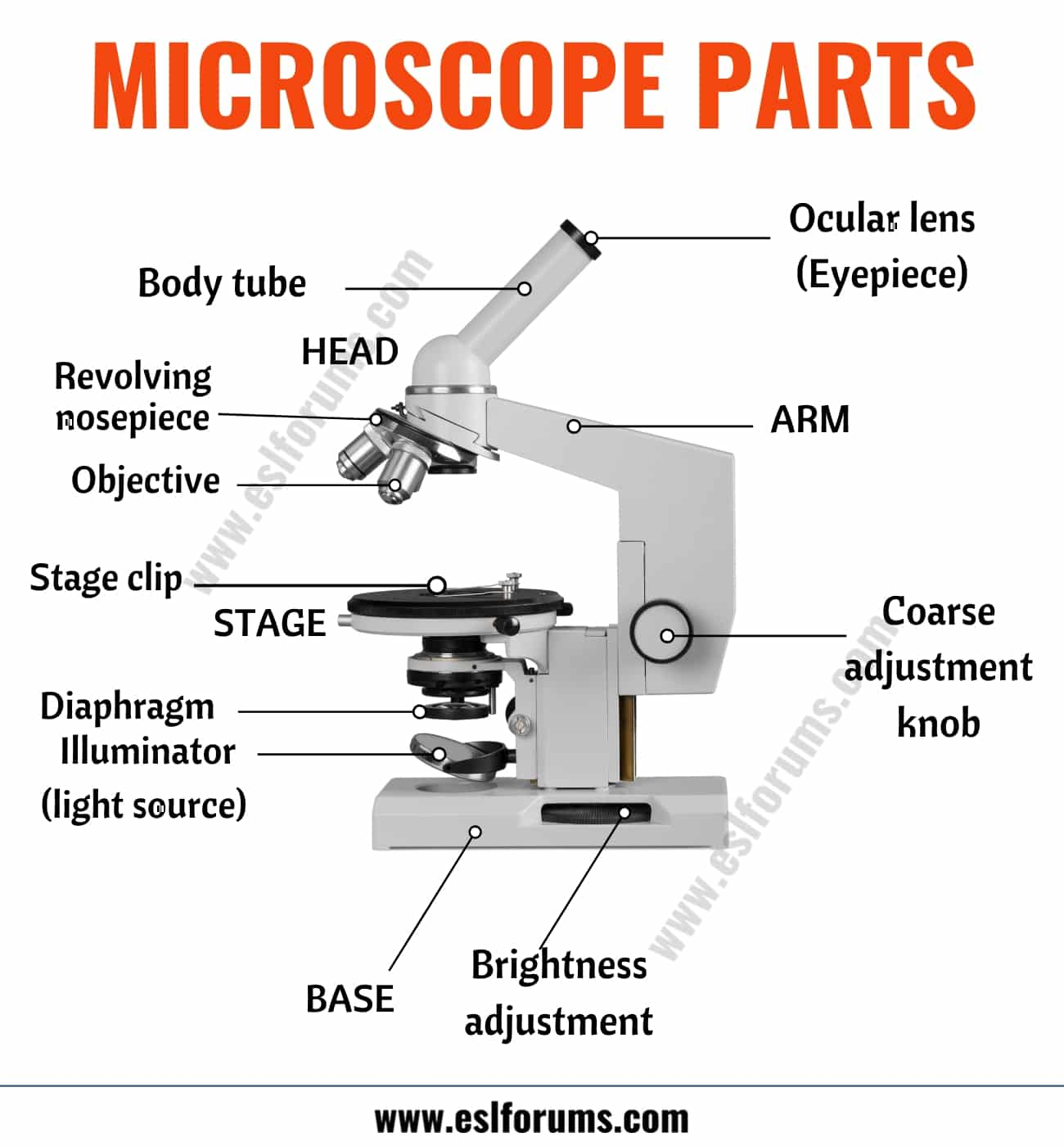 Parts of a Microscope: Useful List of Microscope Parts with ESL Picture!