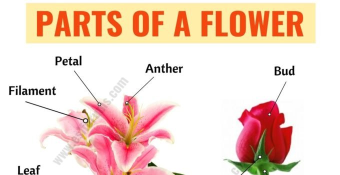 Parts of a Flower: Learn Different Flower Parts with ESL Picture 10