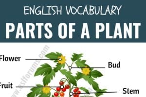 Parts of a Plant: Different Parts of a Plant with ESL Picture! 9