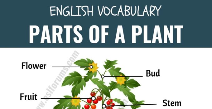 Parts of a Plant: Different Parts of a Plant with ESL Picture! 6