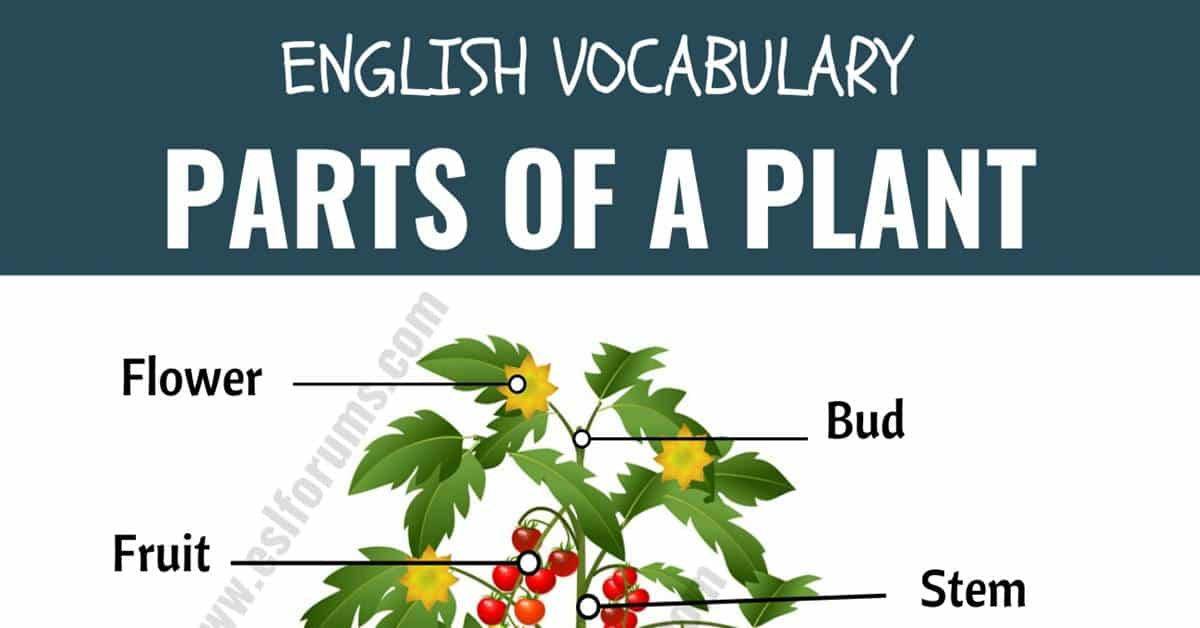 Parts of a Plant: Different Parts of a Plant with ESL Picture! 1