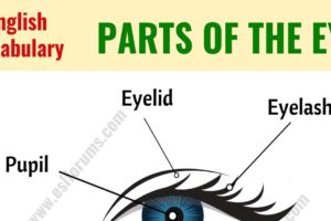Parts of the Eye: Learn Different Eye Parts with ESL Picture! 35