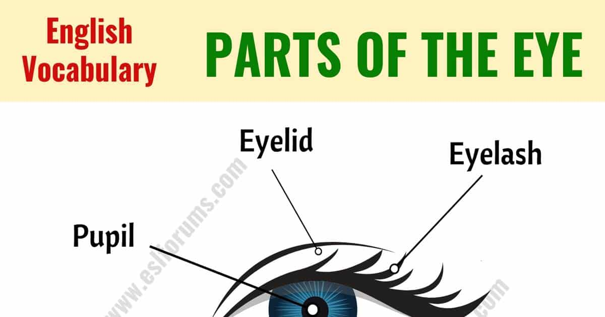 Parts of the Eye: Learn Different Eye Parts with ESL Picture! 1