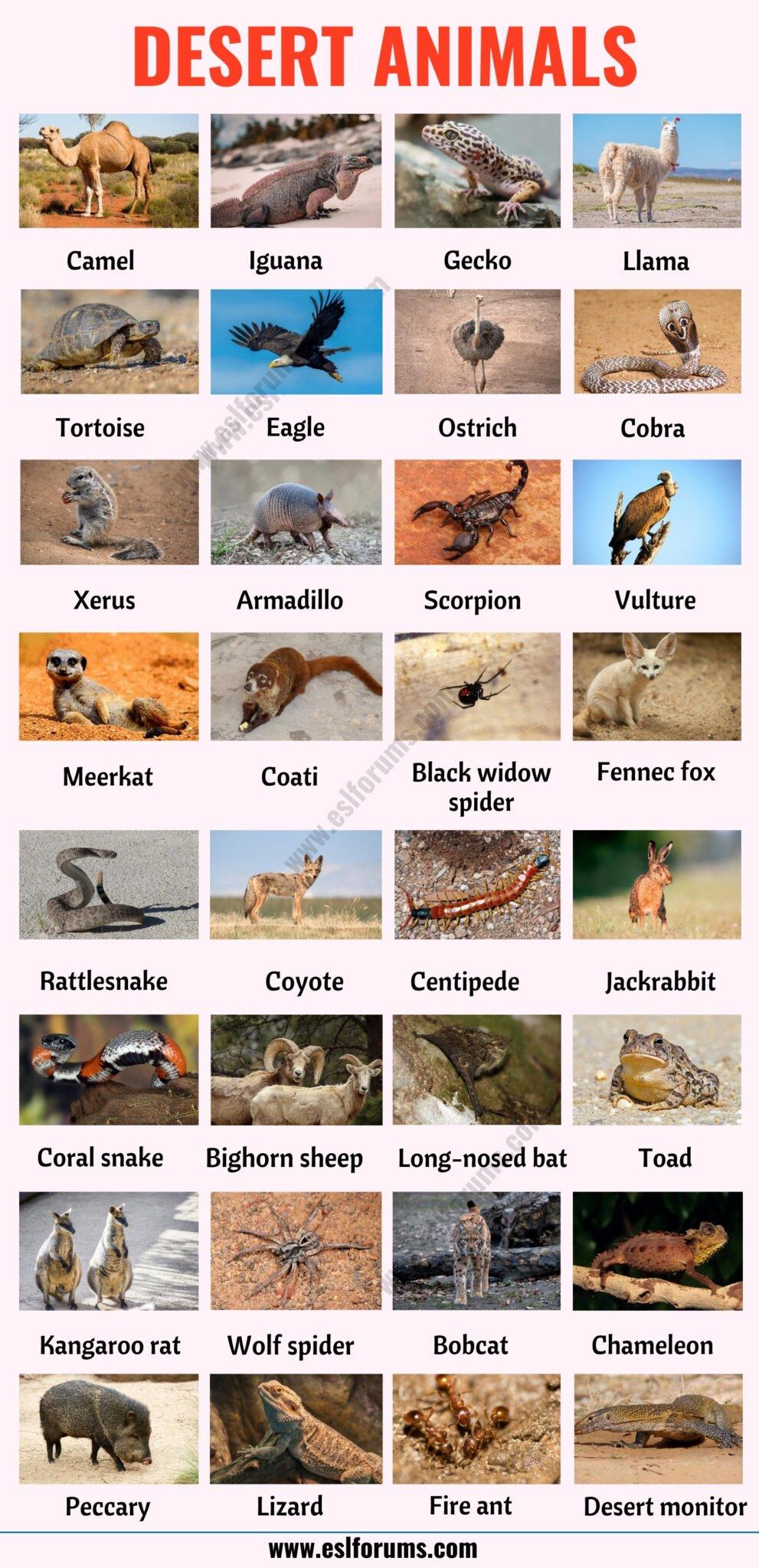 Desert Animals: List of 35+ Best Animals that Live in the Desert with ESL Picture