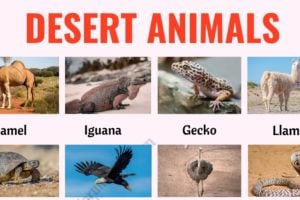 Desert Animals: List of 35+ Best Animals that Live in the Desert with ESL Picture 2