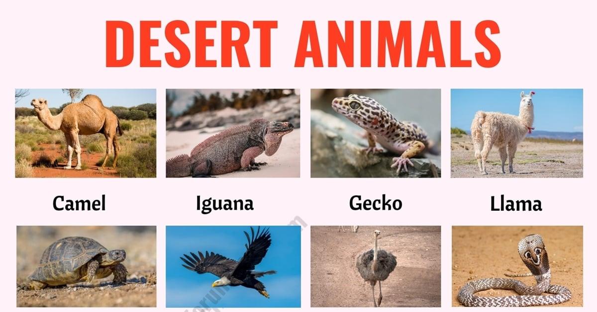Desert Animals: List of 35+ Best Animals that Live in the Desert with ESL Picture 1
