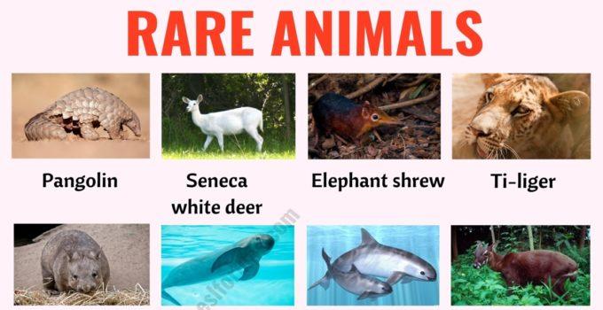 Rare Animals: The 30 Rarest Animals in the World! 1