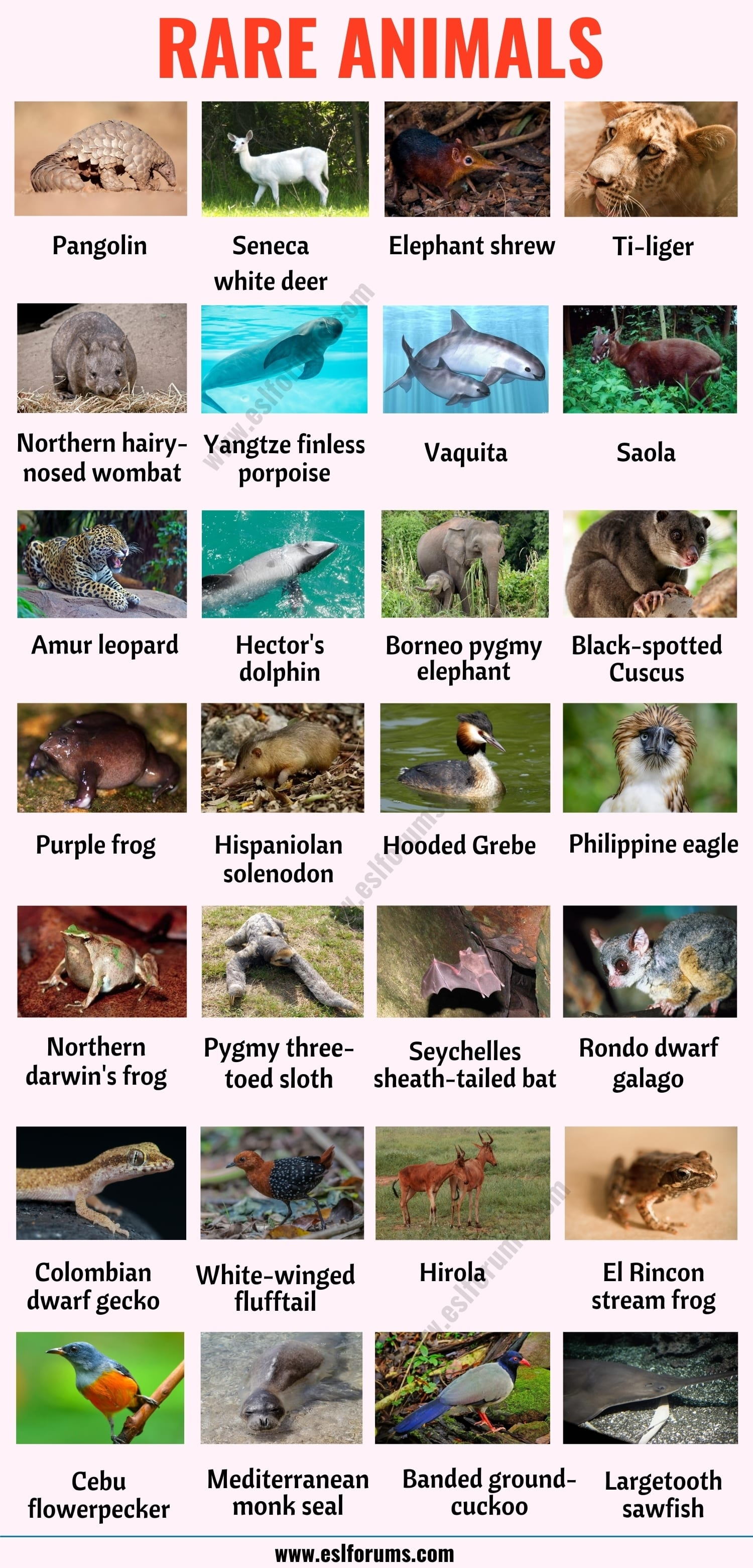 Rare Animals: The 30 Rarest Animals in the World!
